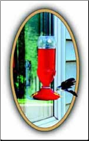 Soda Bottle Hummingbird Window Feeder-SAMPLE