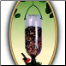 Hanging Soda Bottle Bird Feeder