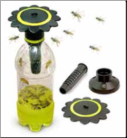 Why the Wasp Trap Works!